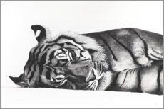 Canvastavla  Sleeping tiger - Rose Corcoran
