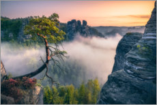 Trätavla  Pölking pine in Saxon Switzerland - Dirk Wiemer