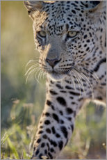 Galleritryck  Leopard - James Hager