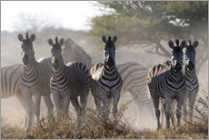 Canvastavla  Group of zebras - Sergio Pitamitz