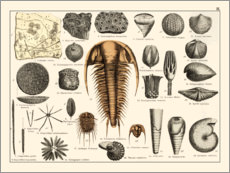 Premiumposter  Fossils II - Wunderkammer Collection