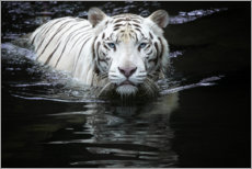 Canvastavla  White Tiger - Renee Doyle