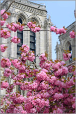 Premiumposter Cherry blossoms in front of Notre Dame