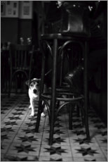 Premiumposter French bistro with a small dog