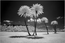 Canvastavla  Infrared palm trees - Peter Hawkins