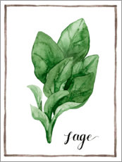 Akrylglastavla  Herbal illustration sage - Grace Popp