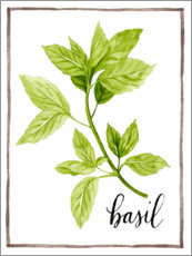 Akrylglastavla  Herbal illustration Basil - Grace Popp