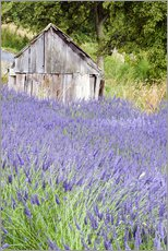 Galleritryck  Lavender field and scales - Janell Davidson