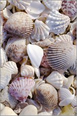 Galleritryck  Shells on the beach - Rob Tilley