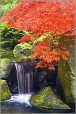 Galleritryck  Waterfall and Japanese Maple - Don Paulson