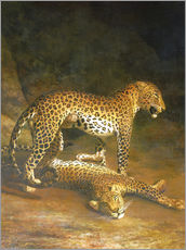 Galleritryck  Two Leopards lying in the Exeter Exchange - Jacques Laurent Agasse