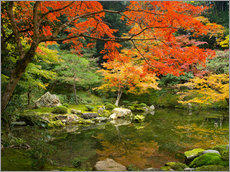 Galleritryck  Japanese garden in autumn with red maple tree - Jan Christopher Becke