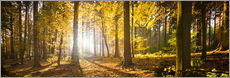 Galleritryck  Autumn forest backlit with sunshine and yellow autumn leaves - Jan Christopher Becke