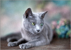 Galleritryck  russian blue - Nailia Schwarz