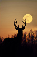 Galleritryck  Whitetail Deer with full moon - Larry Ditto