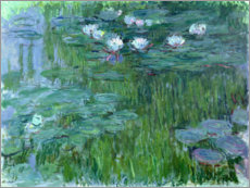 Premiumposter waterlilies