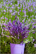 Galleritryck  Lavender in metal bucket - Thomas Klee