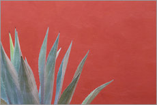 Galleritryck  Agave in front of red wall - Don Paulson