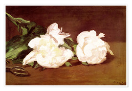 Premiumposter Branch of White Peonies and Secateurs