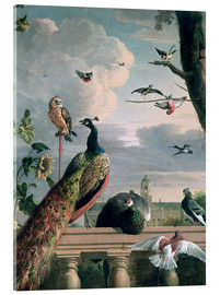 Akrylglastavla  Palace of Amsterdam with exotic birds - Melchior de Hondecoeter
