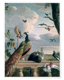 Premiumposter  Palace of Amsterdam with exotic birds - Melchior de Hondecoeter