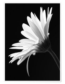Premiumposter  The flower - Falko Follert