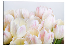 Canvastavla  Pastel-colored tulips 06 - Nailia Schwarz