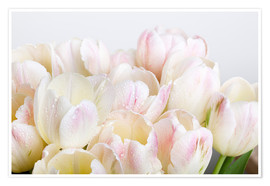 Premiumposter Pastel-colored tulips 06