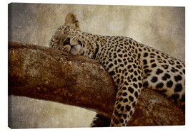 Canvastavla  Sleeping leopard - Thomas Herzog