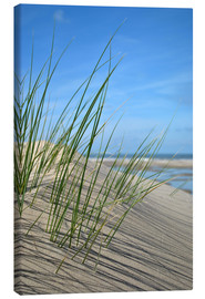 Canvastavla  Dune grasses before playscape - Susanne Herppich