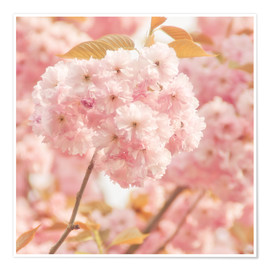 Poster  Japan Cherry - INA FineArt