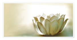 Premiumposter White Lotus