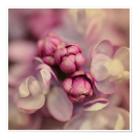 Premiumposter  Lilac - Evelyn Meyer