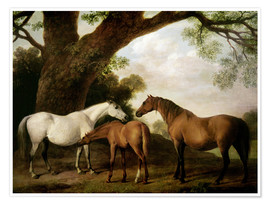 Premiumposter Two Shafto Mares and a Foal