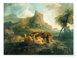 Premiumposter Leopards at Play