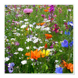 Poster  Flowers meadow - blackpool
