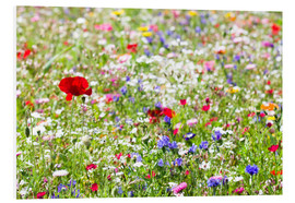 PVC-tavla  Colorful Meadow - Suzka