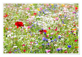 Premiumposter Colorful Meadow