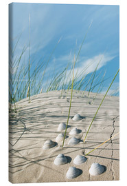 Canvastavla  Dune with sea shells - Reiner Würz