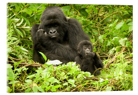Akrylglastavla  Gorilla with baby in the green - Joe & Mary Ann McDonald