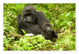 Premiumposter  Gorilla with baby in the green - Joe & Mary Ann McDonald