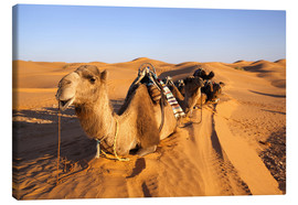 Canvastavla  Saddled camels in the desert - Walter Bibikow