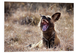 PVC-tavla  Yawning wild dog - Wendy Kaveney