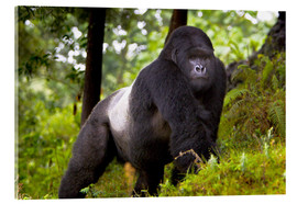 Akrylglastavla  Mountain gorilla on a foray - Ralph H. Bendjebar