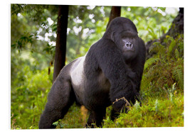 PVC-tavla  Mountain gorilla on a foray - Ralph H. Bendjebar