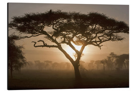 Aluminiumtavla  Acacia tree at sunrise - Ralph H. Bendjebar