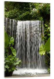 Akrylglastavla  Waterfall in the orchid garden - Cindy Miller Hopkins