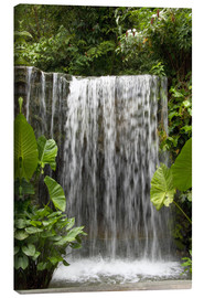 Canvastavla  Waterfall in the orchid garden - Cindy Miller Hopkins
