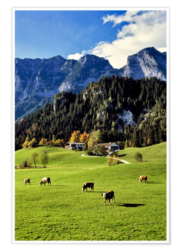 Premiumposter Alps and pasture cows