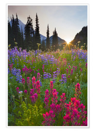 Premiumposter  Flower meadow at sunrise - Gary Luhm